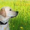 Welches Hundehalsband ist am besten fr Welpen geeignet?